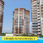 Liparis SunFlowers 2